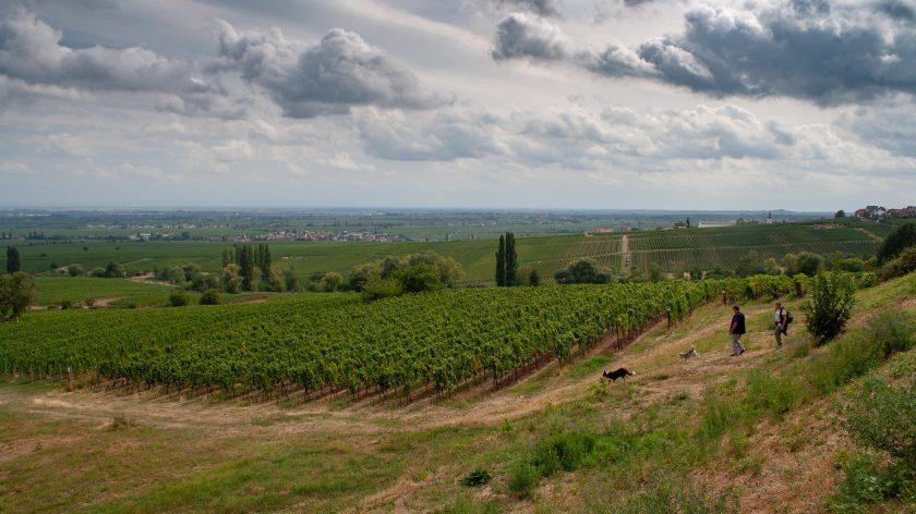 Ausblick von der Villa Ludwigshöhe auf die Pfalz